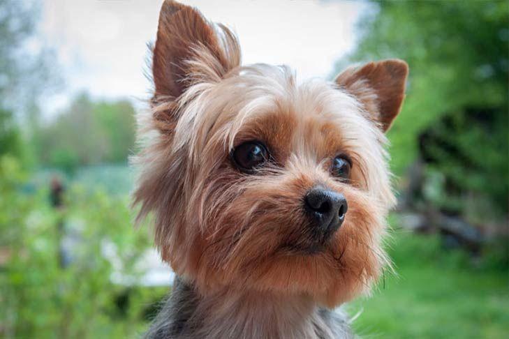 Dünyanın En Sevimli Köpekleri