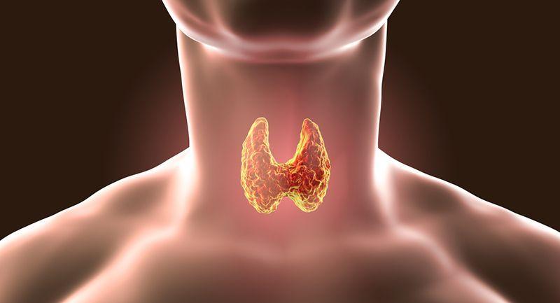 Anti-Tpo / Anti-Tiroglobulin ve Guatr / Tiroglobulin Nedir? / Tiroglobulin Yüksekliği Ne Anlama Gelir? / Anti Tiroglobulin Antikor Yüksekliği Zararları Nelerdir?