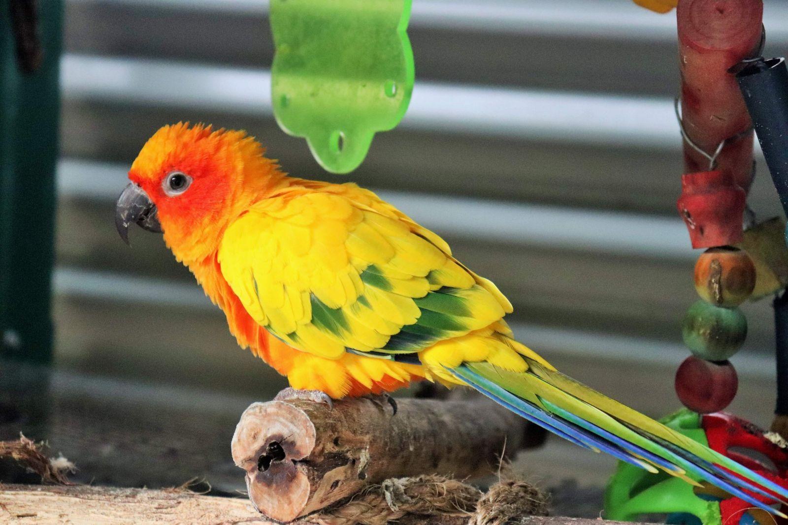 Papağan Türleri Ve Doğal Yaşam Alanları