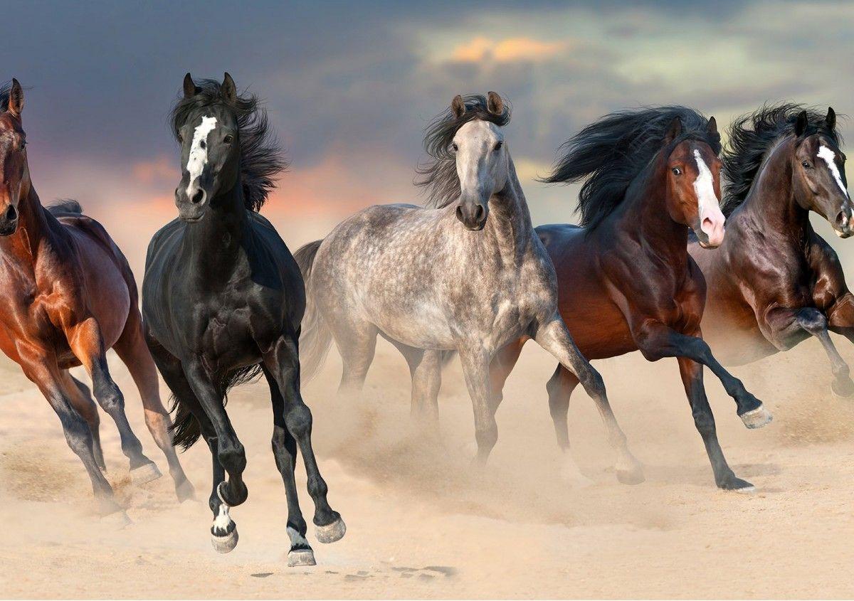 Rüyada Rengarenk Atları Görmek Ne Anlama Gelir?