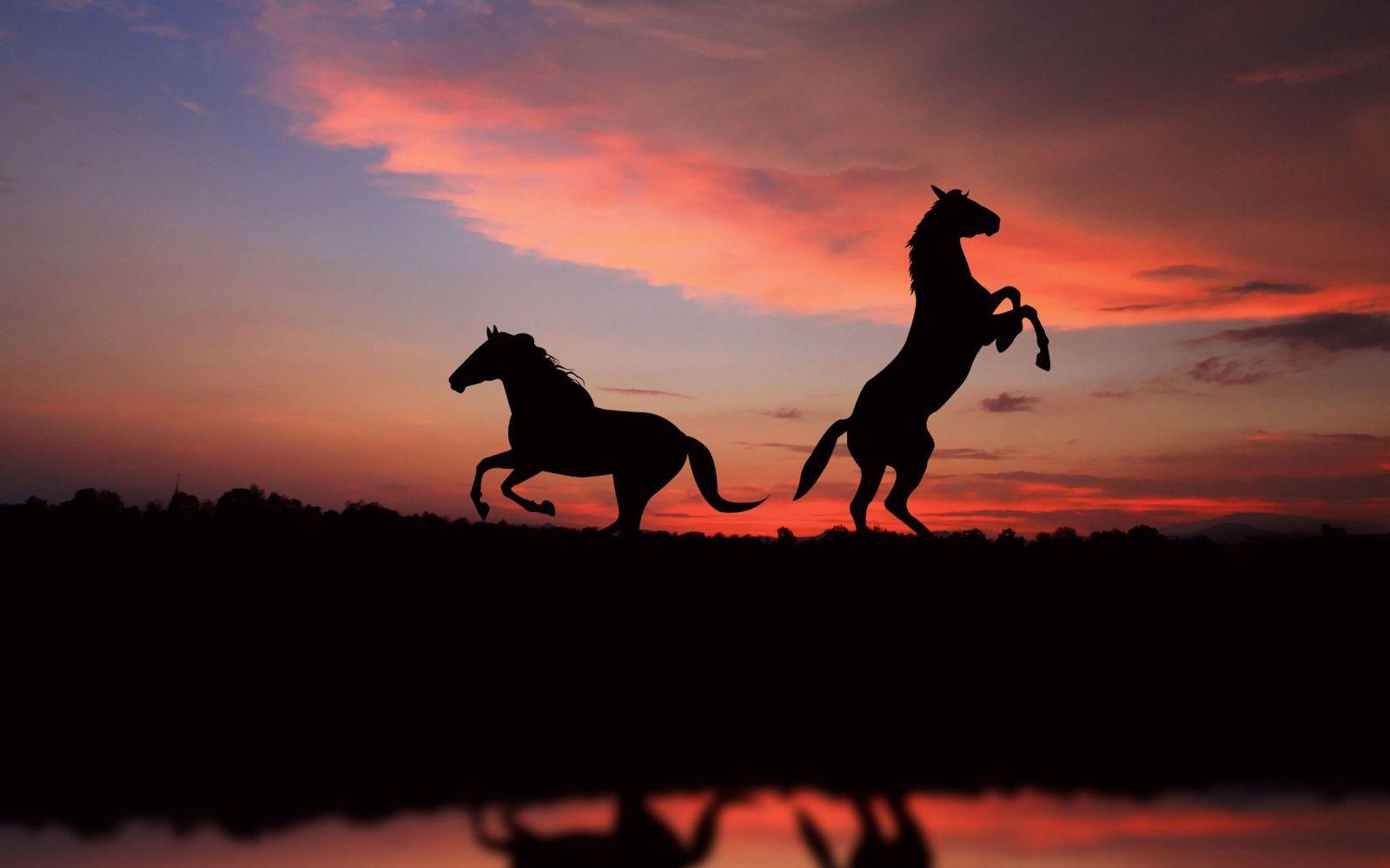Rüyada At Görmek ne anlama gelir?