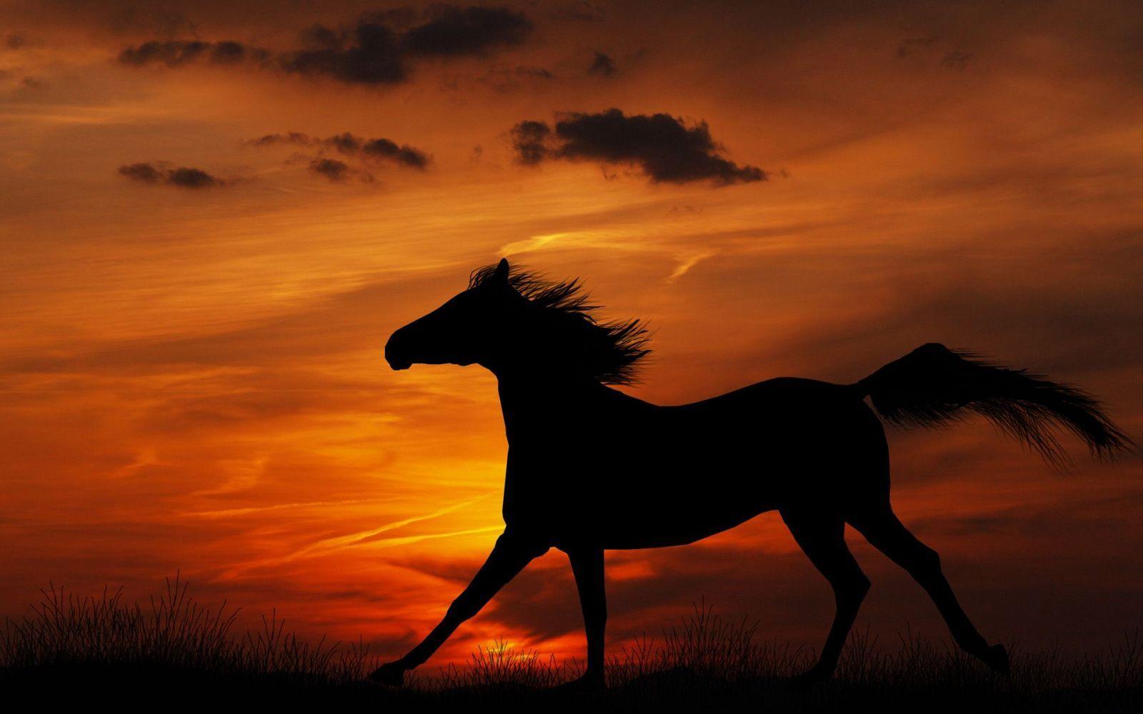 Rüyada At Görmek Neye İşarettir?