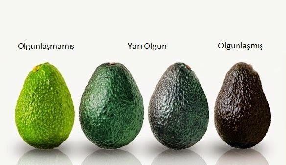 avokado-cesitleri