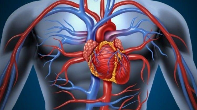 İskemik Kalp Hastalığı Nedir?