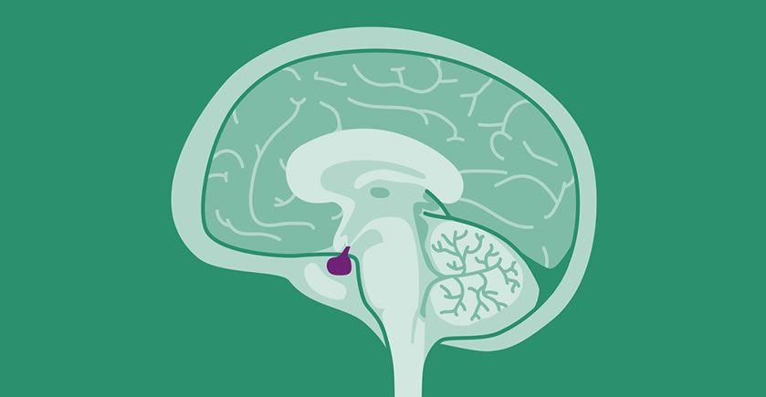 Prolaktin (prolactin) nedir? Kadınlarda prolaktin hormonu kaç olmalı?
