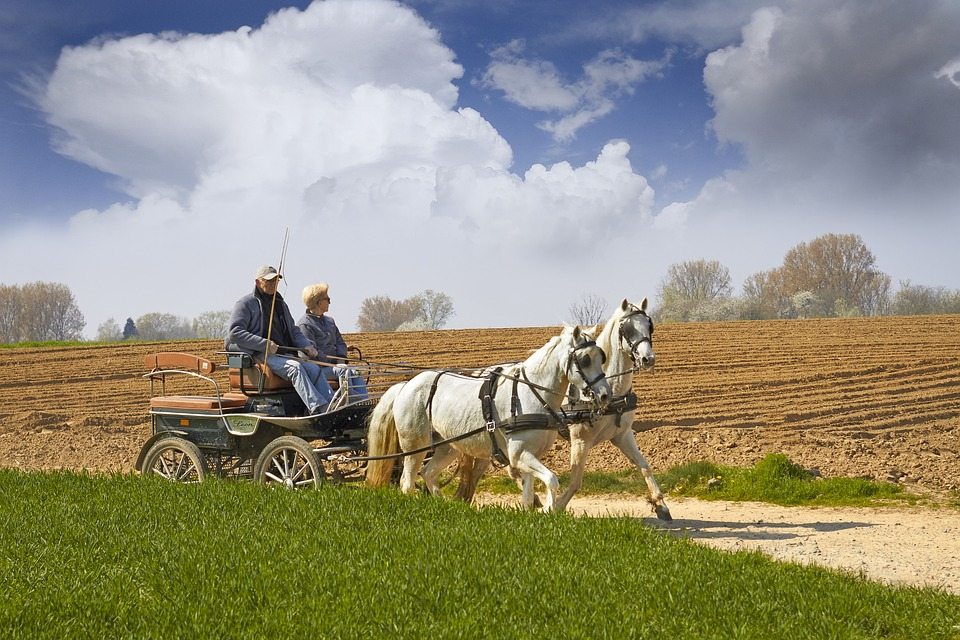 Rüyada At Arabası Sürmek Ne Anlama Gelir?