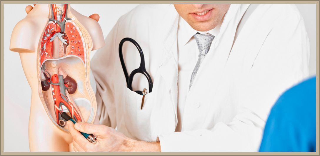 Üroloji Ne Demektir? Üroloji Hangi Hastalıklara Bakar? Üroloji Bölümü Nedir?