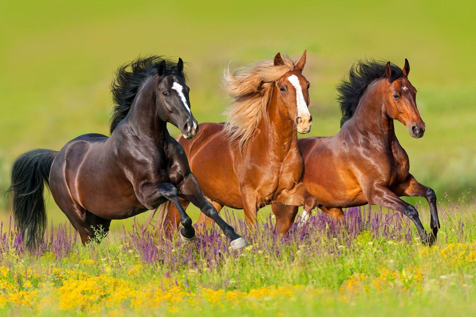 Rüyada At Sürüsü Görmek Ne Anlama Gelir