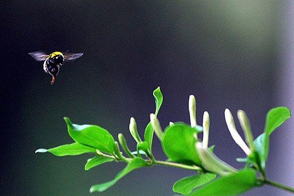 Yaban arılarının saldırdığı belediye başkanı öldü