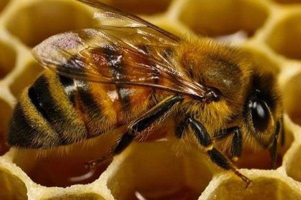Binlerce arı aynı yerde toplandı