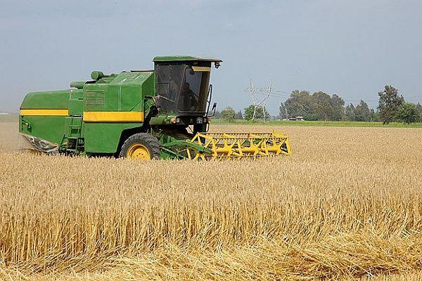 Kuraklık buğday üretimini vurdu
