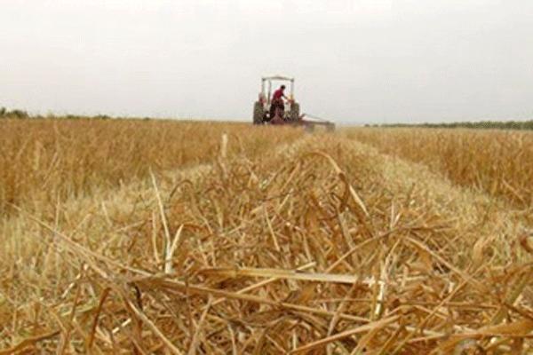 Çiftçilere müjde! Devletten büyük destek