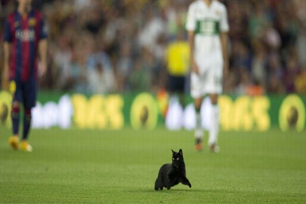 Barcelona-Elche maçına davetsiz misafir