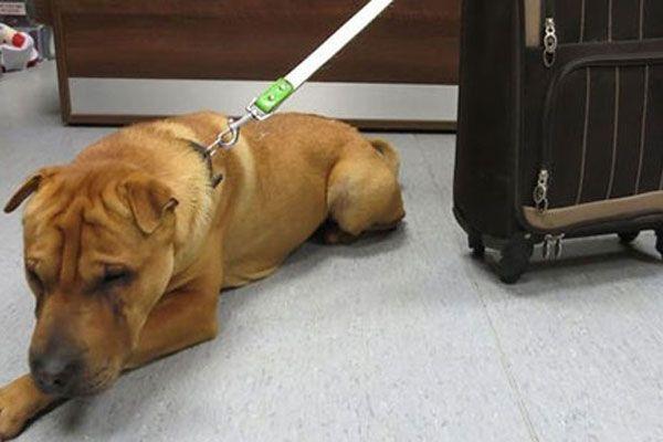 Vicdansız sahip köpeğini bavuluyla birlikte terk etti