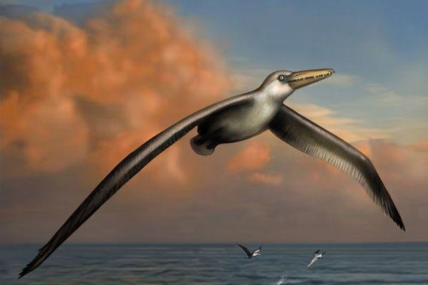 Bilim insanları şaşkın! Bir kanadının uzunluğu 6 metre