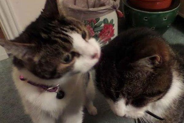 Kayıp kedi Toby, 12 yıl sonra annesine kavuştu