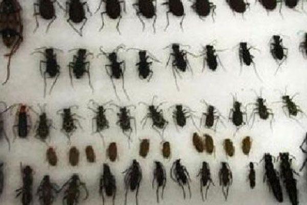 Böcek toplayan turistlere ceza kesildi