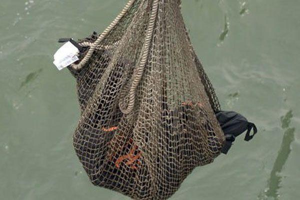 Düşen uçağın yolcuları ağlarla denizden toplandı