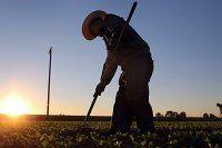 Hükümetten çalışana gıda desteği geliyor