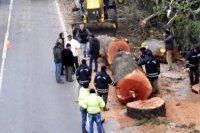 Yalova'da kesilen ağaçlar bakın ne yapılacakmış!