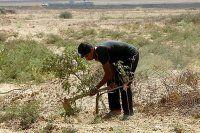 İsrail, Filistinlilerin tarım arazilerine ateş açtı
