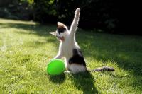 Tüm zamanların en iyi kedi resimleri