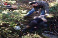 Mantar toplamaya çıktı cesedi bulundu