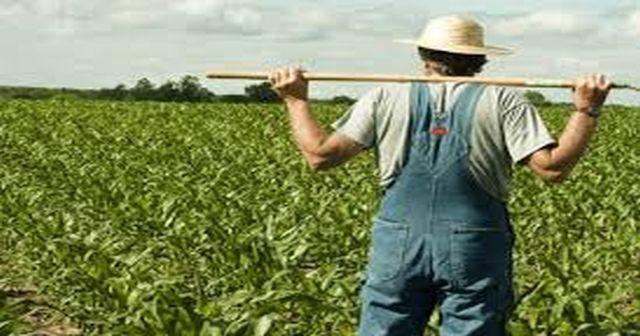 Çiftçiye güzel haber