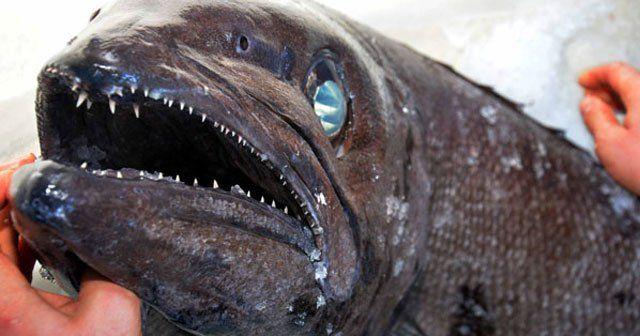 Türkiye sularında bir ilk! Muğla açıklarında yakalandı