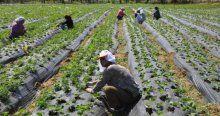 Doğu Karadeniz'de tarım istihdamı düştü