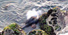 Kayalıklara sıkışmış kadın cesedi bulundu