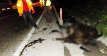 Servis aracı kaza yaptı, 3 inek telef oldu