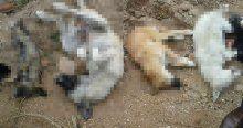 Avcılar Sokak Hayvanlarını Kısırlaştırma ve Rehabilitasyon Merkezi'nde vahşet