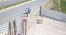 Bekçi köpeğini vahşice katlettiler