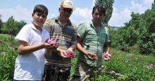 Şifa kaynağı ekinezya yok satıyor