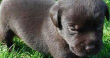 İki yıl boyunca köpek diye besledi, ayı çıktı