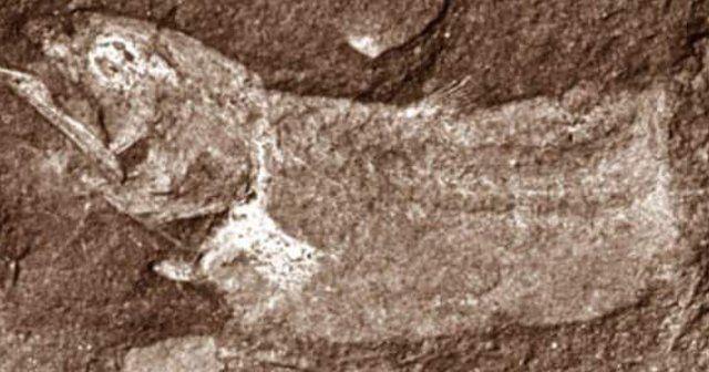 360 milyon yıllık balık mezarlığı bulundu