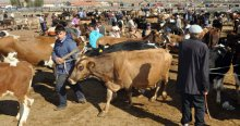 Kurbanlık hayvan alırken dikkat edilmesi gerekenler