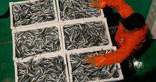 Marmara'da balık bereketi