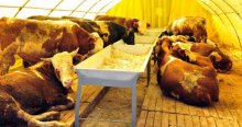 Terör olayları hayvan pazarlarını etkiledi