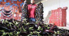 Eylül'de zam şampiyonu patlıcan