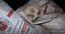 Çöpteki kafatasının sırrını Vali açıkladı