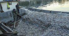 Hamsi bollaşınca balıkçı tekneleri limana sığmadı