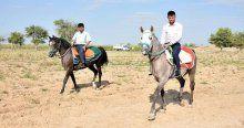 Suruç'un 'şampiyon' atları sahiplerine büyük paralar kazandırıyor
