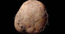 Bu patates fotoğrafı bir milyon dolara satıldı