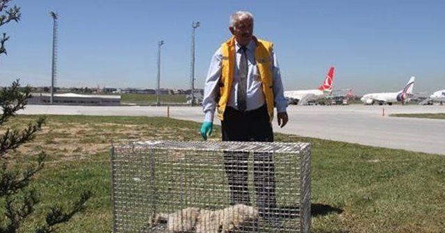 Uçuş trafiğini engelleyen köpekler için özel tim