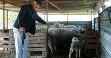 Koyun hırsızları bu köye dadandı