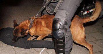 Hollanda'da Türk vatandaşlarına polis köpekleriyle müdahale
