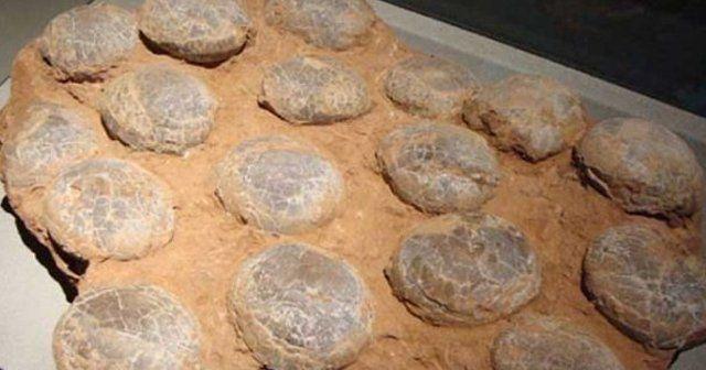 Çin'de 70 milyon yıllık dinozor yumurtaları