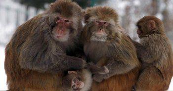 Hindistan'da maymunlarla yaşayan kız çocuğu bulundu